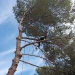 Démontage d'un pin