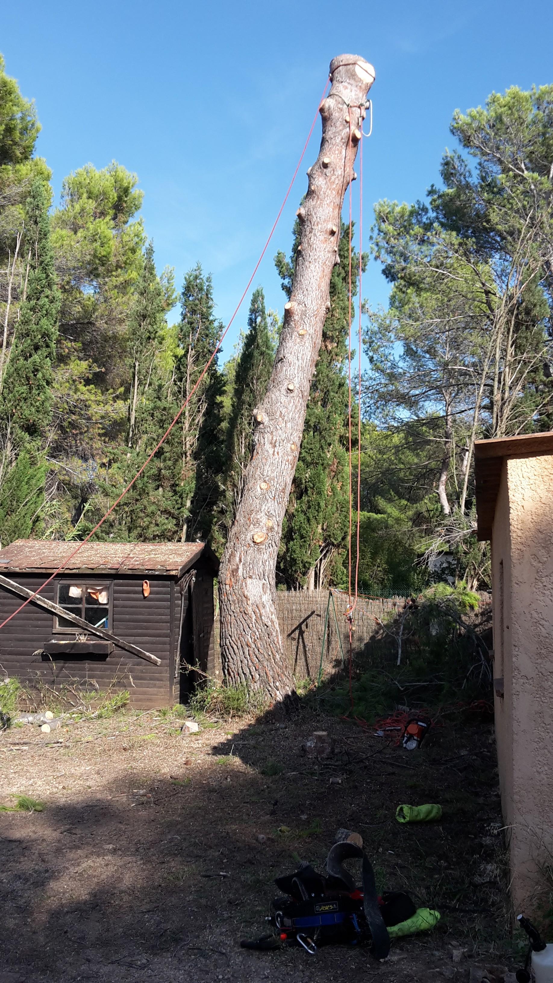 Abattage arbre languedoc roussillon
