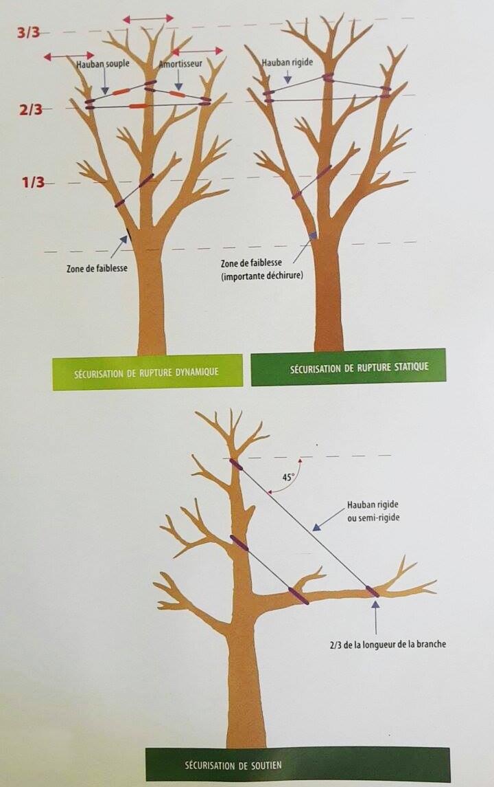 Schéma de présentation de l'haubanage